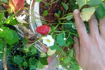 Capacitación gratuita en AGRICULTURA URBANA ⚡ Formato mixto 💻 11 - OiHoy Casa Abierta
