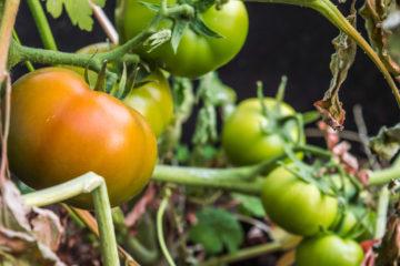 Agricultura Urbana con orientación al Cultivo Natural 15 - OiHoy Casa Abierta