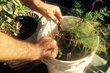 Cultivo Natural 14